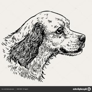 Brittany Spaniel Dog Vector: Stock Illustration Sketch Portrait Of A Spaniel