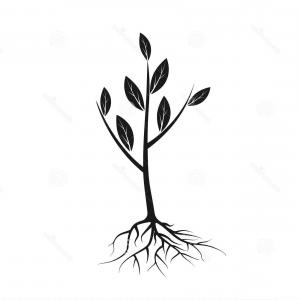 Sapling Vector Tree Silhouette Art: Tree Silhouette Isolated On White Background Vector