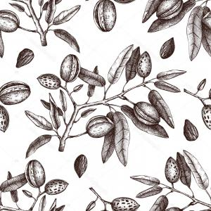 Almond Tree Vector: Vector Illustration Branch Almond Tree Almonds
