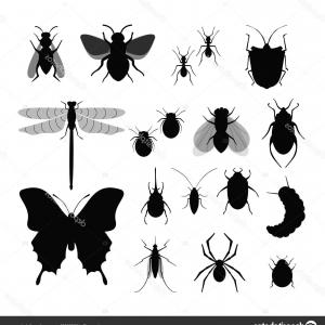 Insect Vector Silhouette: Stock Illustration Vector Illustration Set Of Insects