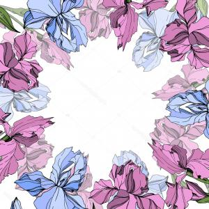 Vectors Pink Wildflower: Stock Illustration Vector Pink Blue Iris Floral