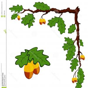 Oak Leaf Vector Clip Art: Stock Image Drawn Oak Branch Leaves Acorns Vector Image