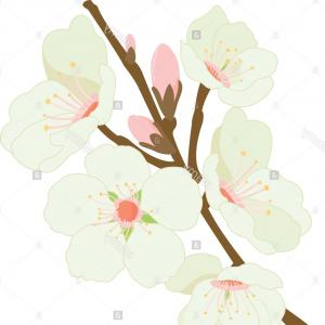Almond Tree Vector: Stock Photo Blossoming Almond Tree Branch With Flowers