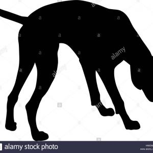 Pointer Hound Vector: Stock Photo Vector Illustration Of German Short Hair Pointer Silhouette
