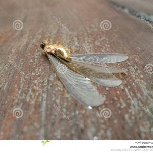 Termites With Wings Vector: Photostock Vector Snide Flying Pigeon Vector Illustration