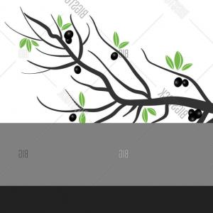 Olive Tree Leaves Vector: Stock Vector Vector Stylized Olive Tree Branch With Olives And Leaves