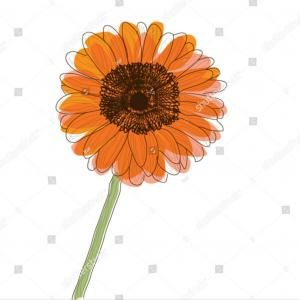 Orange Gerber Daisy Vector: Attractive Royalty Free Stock Images Gerbera Daisy Background Image