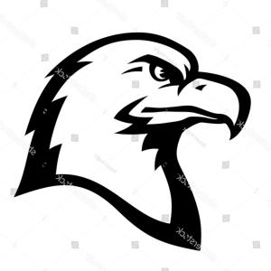 Us Eagle Head Vector: Stylized Illustration American Eagle Bald Head