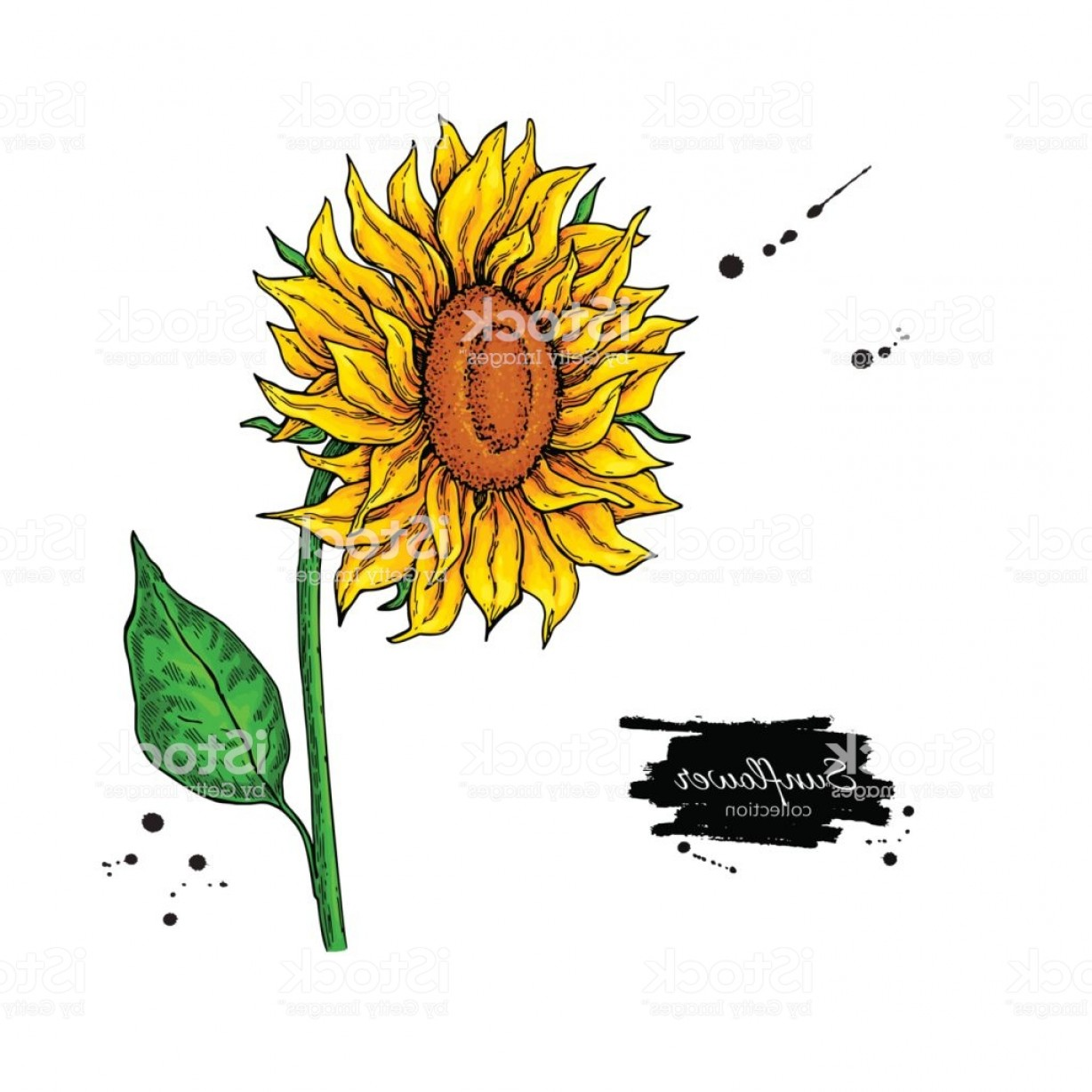 Seed Flower Vectors: Sunflower Flower Vector Drawing Hand Drawn Illustration Isolated On White Background Gm