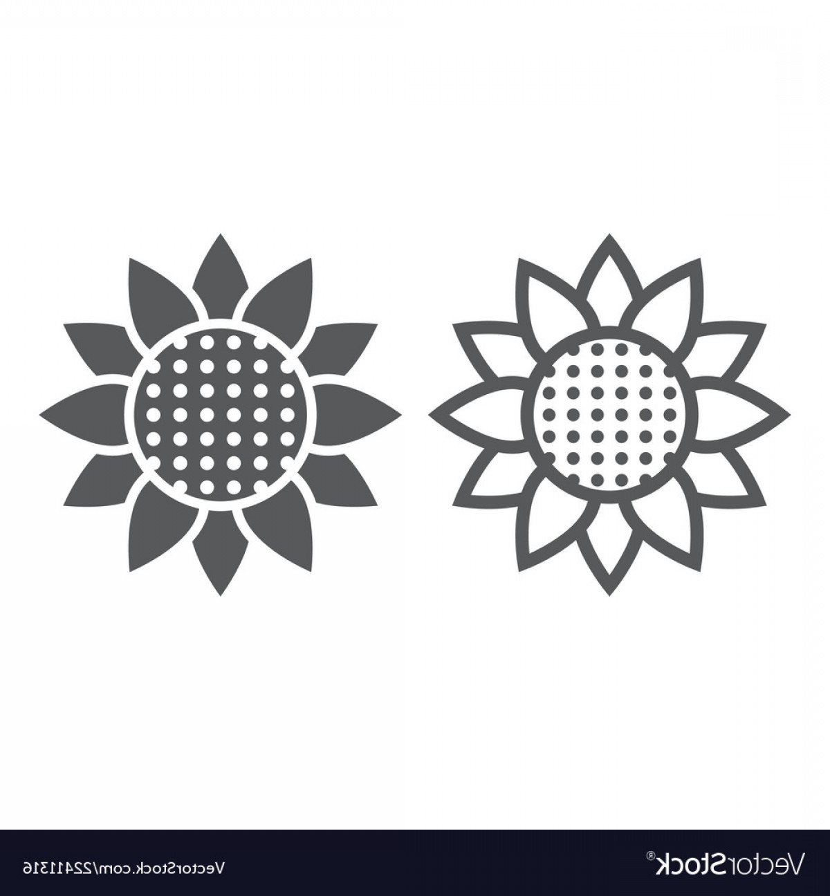 Floral Vector Icon: Sunflower Line And Glyph Icon Nature And Floral Vector