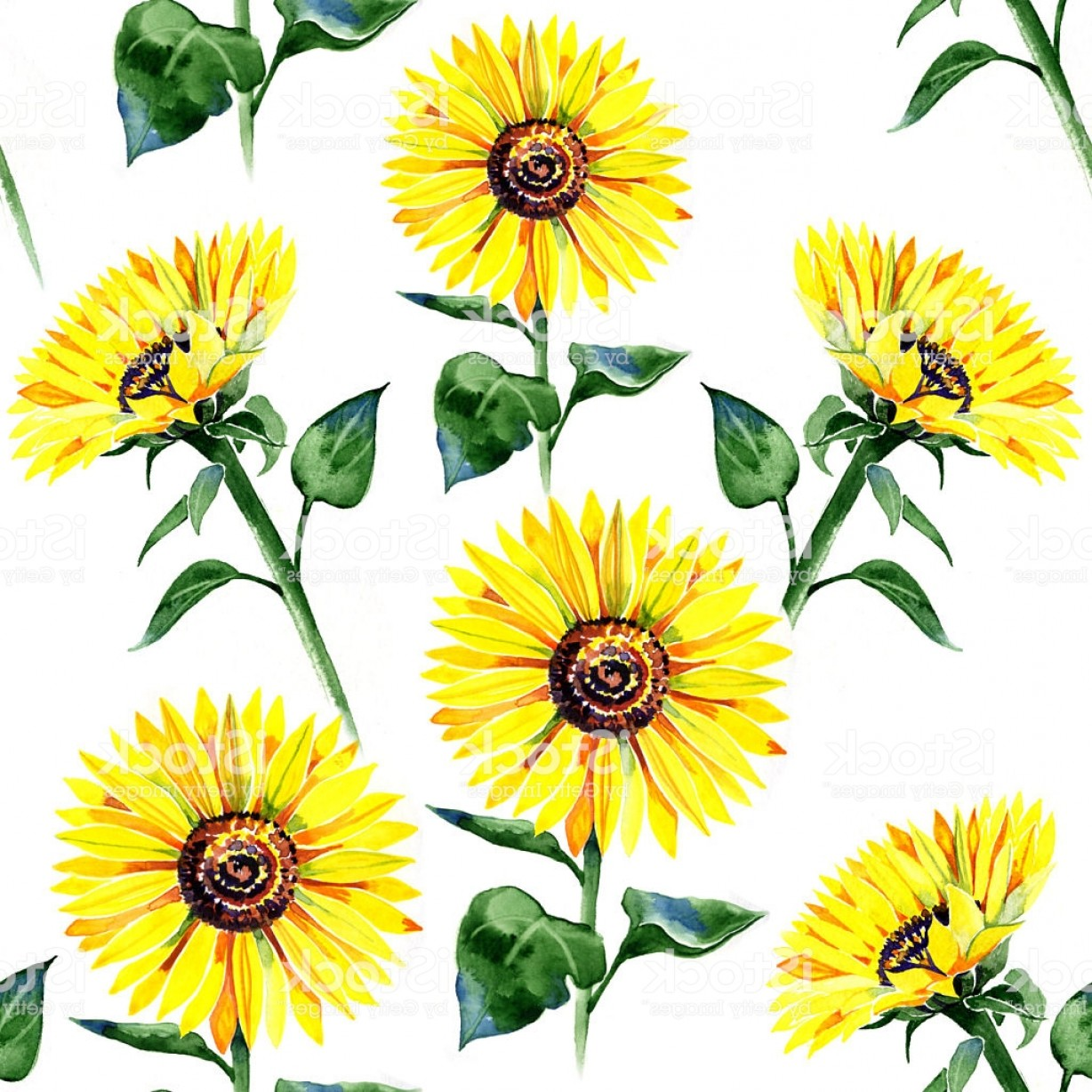Sunflower Vector Pattern: Sunflower Summer Watercolor Pattern Painting Gm