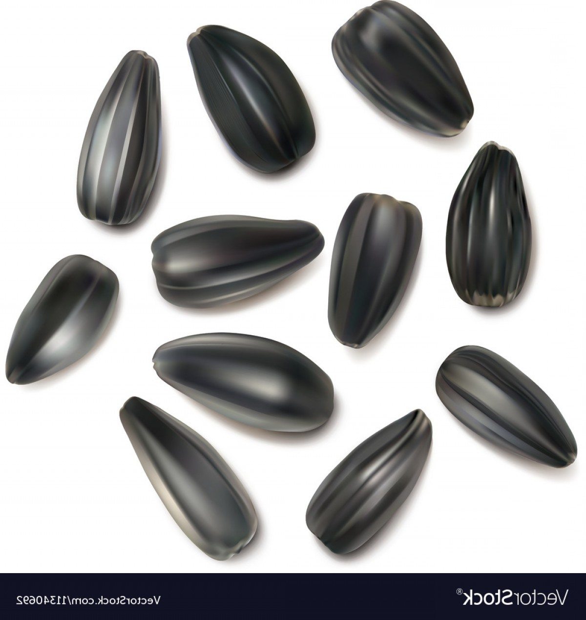 Vector Black And White Sunflower Seed: Sunflowers Seeds On A White Background Vector