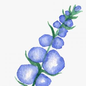 Vector Texas Bluebonnets: Texas State With Bluebonnet Flower