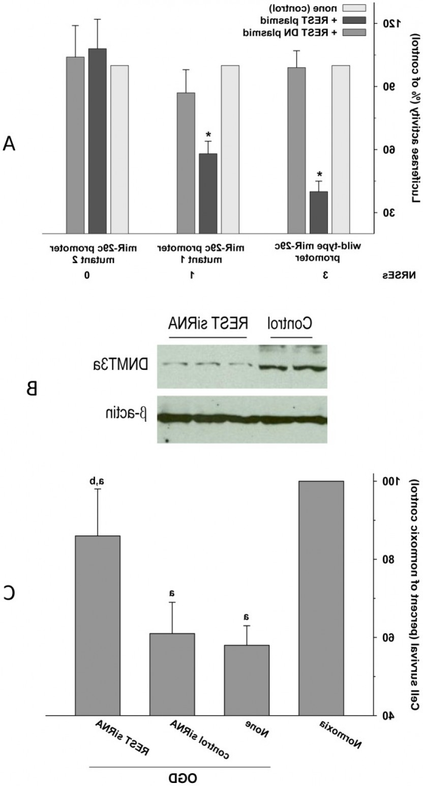 TSS Vector: The Mir C Promoter Has Upstream Binding Sites Within Kb From Tss For Thefig