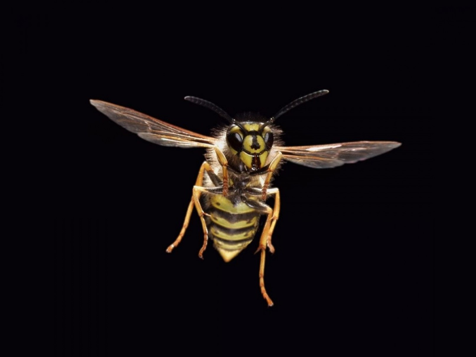Wasp Attack Vector Tactical: These Wasp Like Drones Lift Heavy Loads With Their Bellies