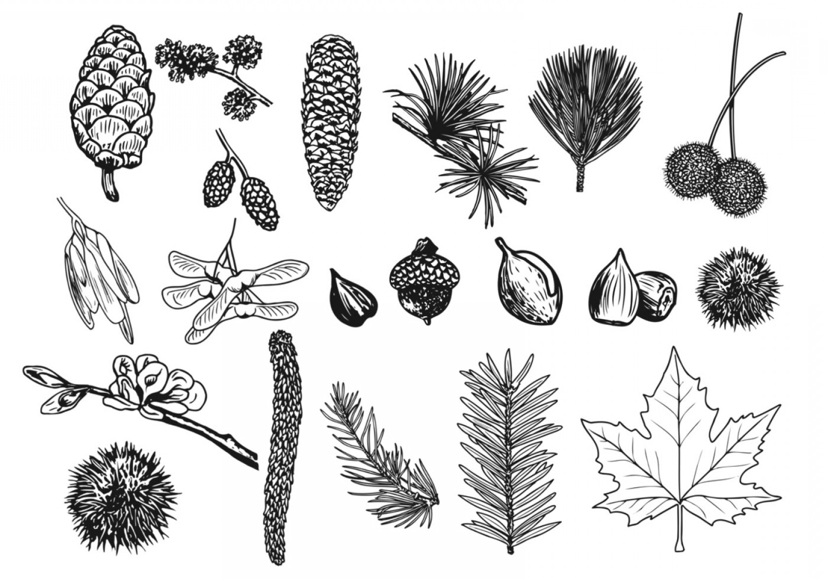 Pine Leaves Vector: Things In The Forest Vector Pack