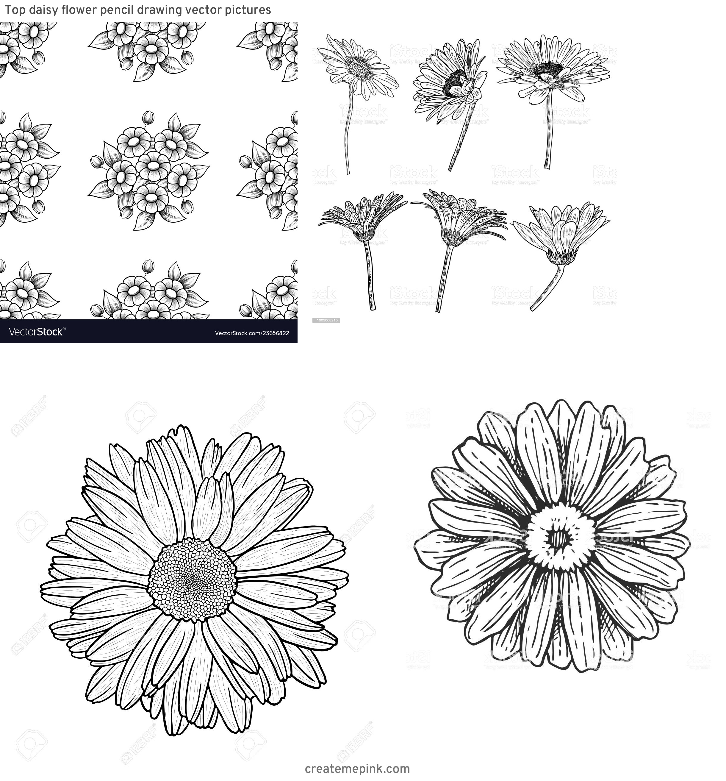 Flower Daisey Black Vector Art: Top Daisy Flower Pencil Drawing Vector Pictures