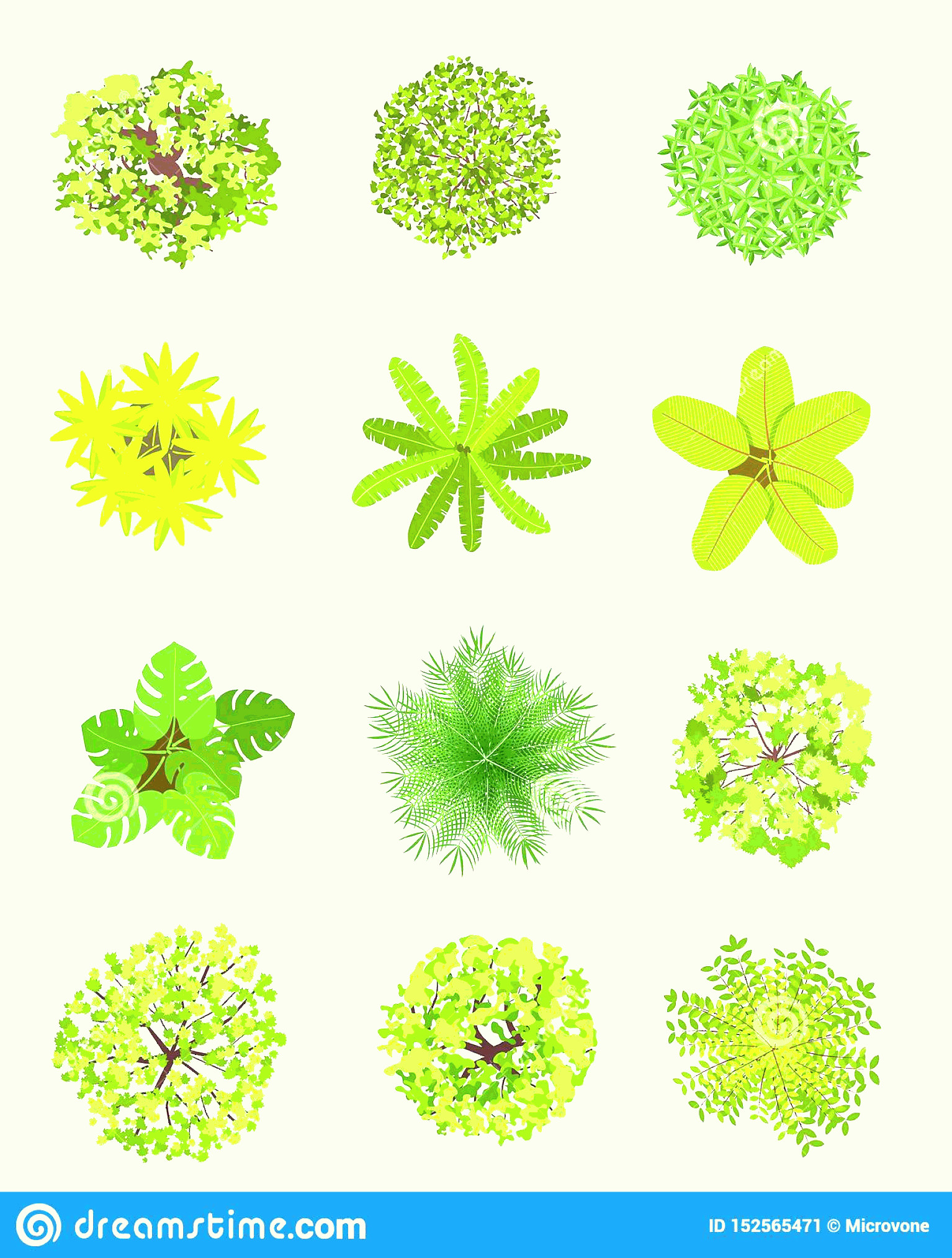 Vector Tree Symbols Plan: Top View Tree Landscape Plan Trees Leaves Bushes Garden Planting Vector Isolated Design Elements White Image