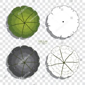 Vector Tree Symbols Plan: Tree Plan Collection Shadow Transparent Background