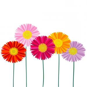 Orange Gerber Daisy Vector: Comfortable Royalty Free Stock Photo Gerbera Daisy Background Image