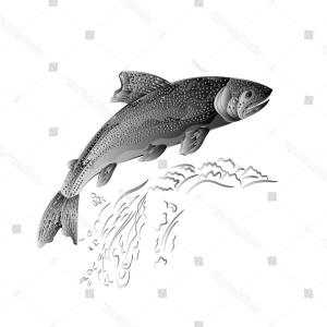Speckled Trout Vector: Trout Jumps Stream Salmonpredatory Fish Wrought