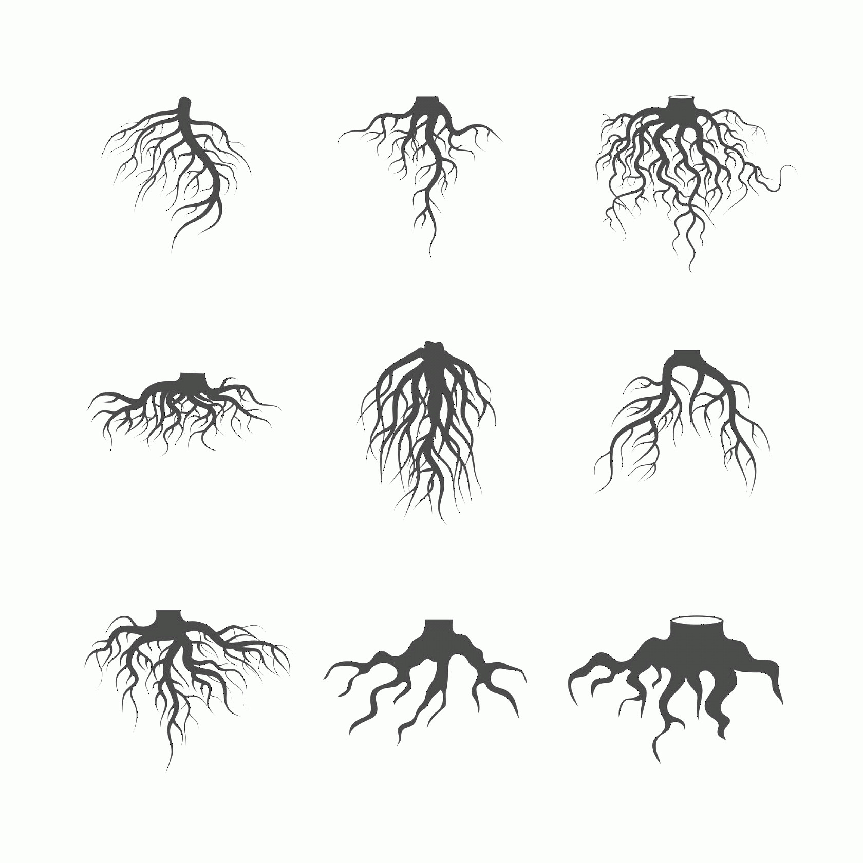 Vector Tree With Roots Drawing: Tree And Plant Underground Roots Vector Set