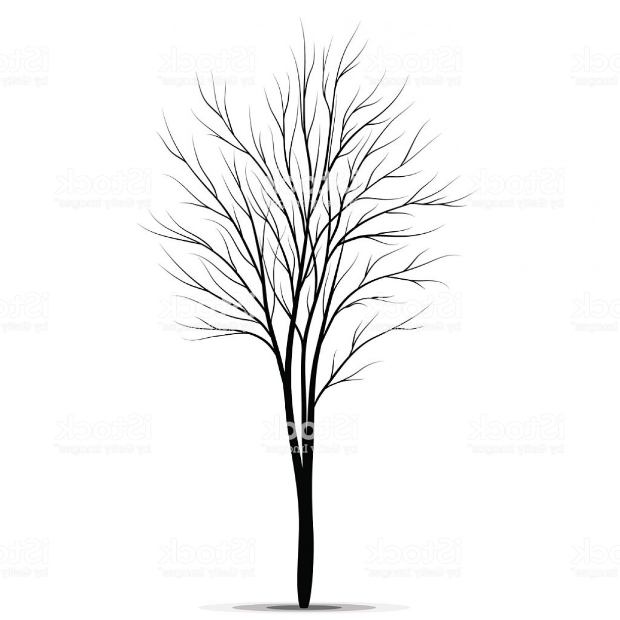 Sapling Vector Tree Silhouette Art: Tree Silhouette Isolated On White Background Gm