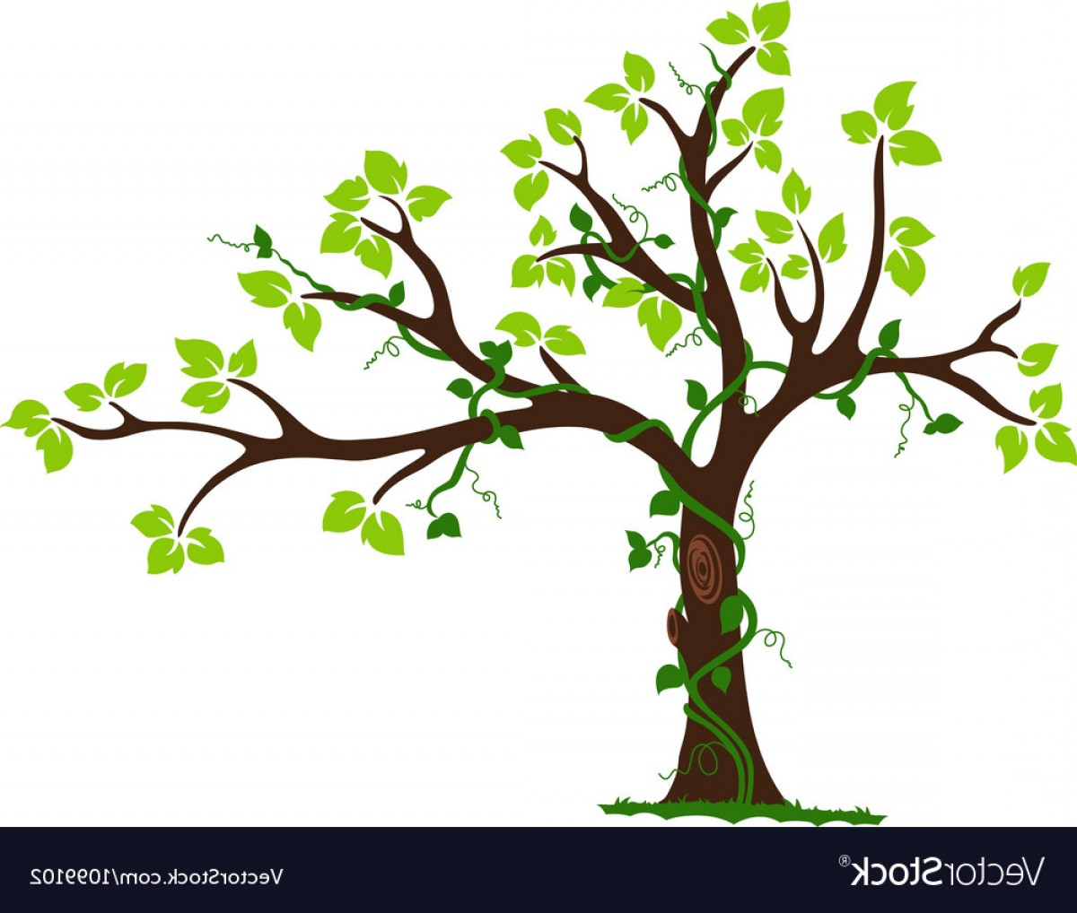Vector Vine Tree: Tree With Liana And Vine Vector