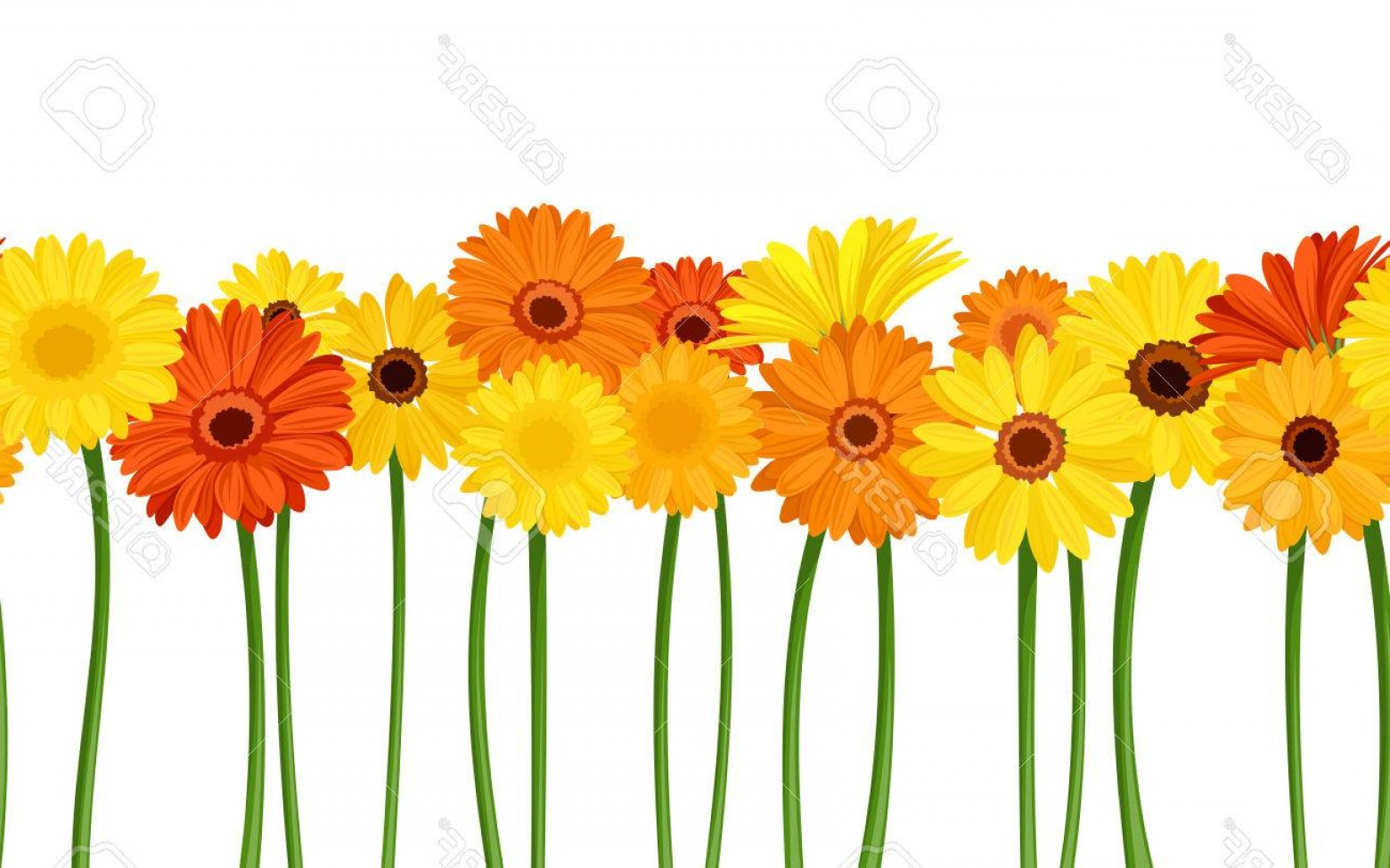 Orange Gerber Daisy Vector: Trendy Photostock Vector Horizontal Seamless Background With Gerbera Flowers