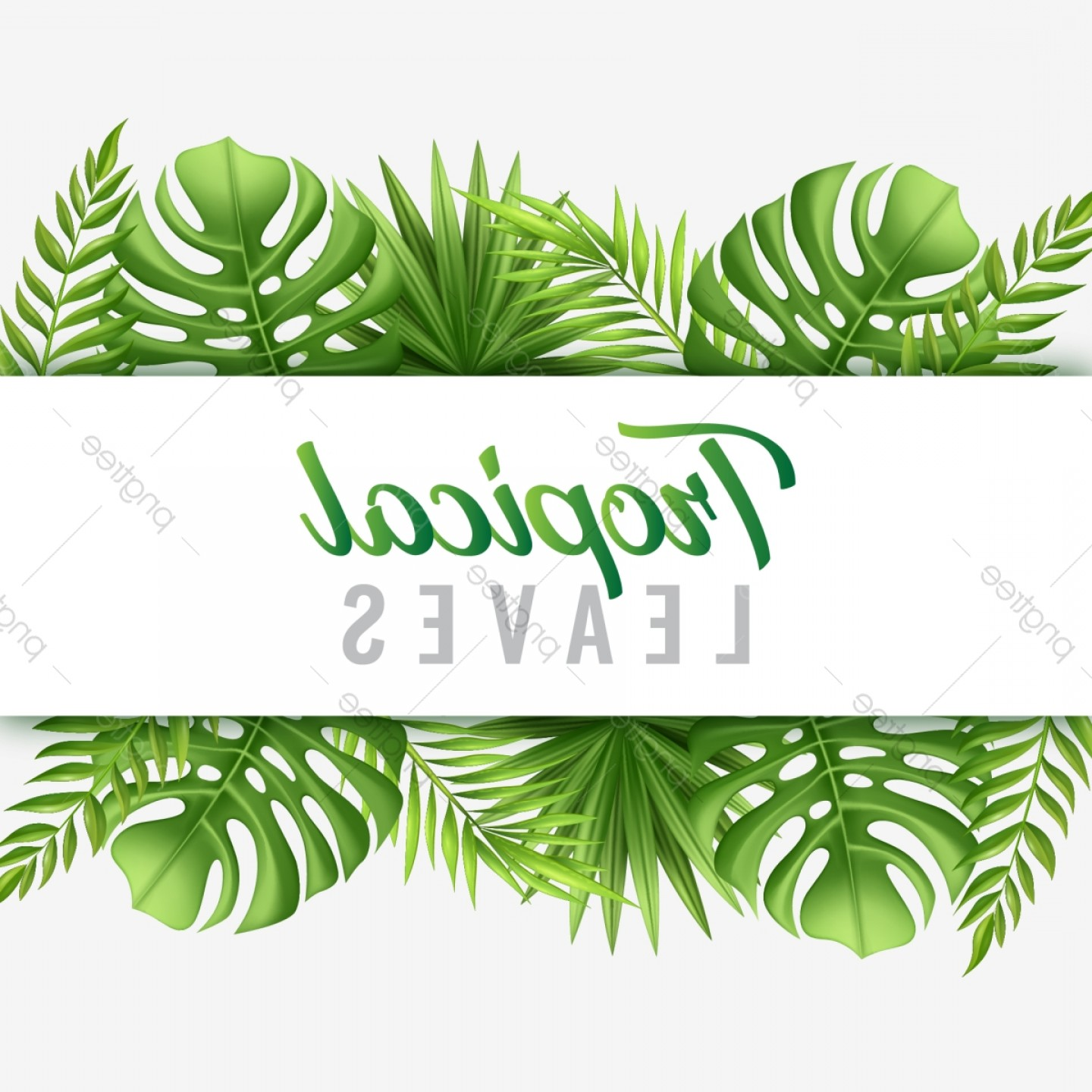 Summer Transparent Vector: Trendy Tropical Summer Leaves With Typography Frame Vector