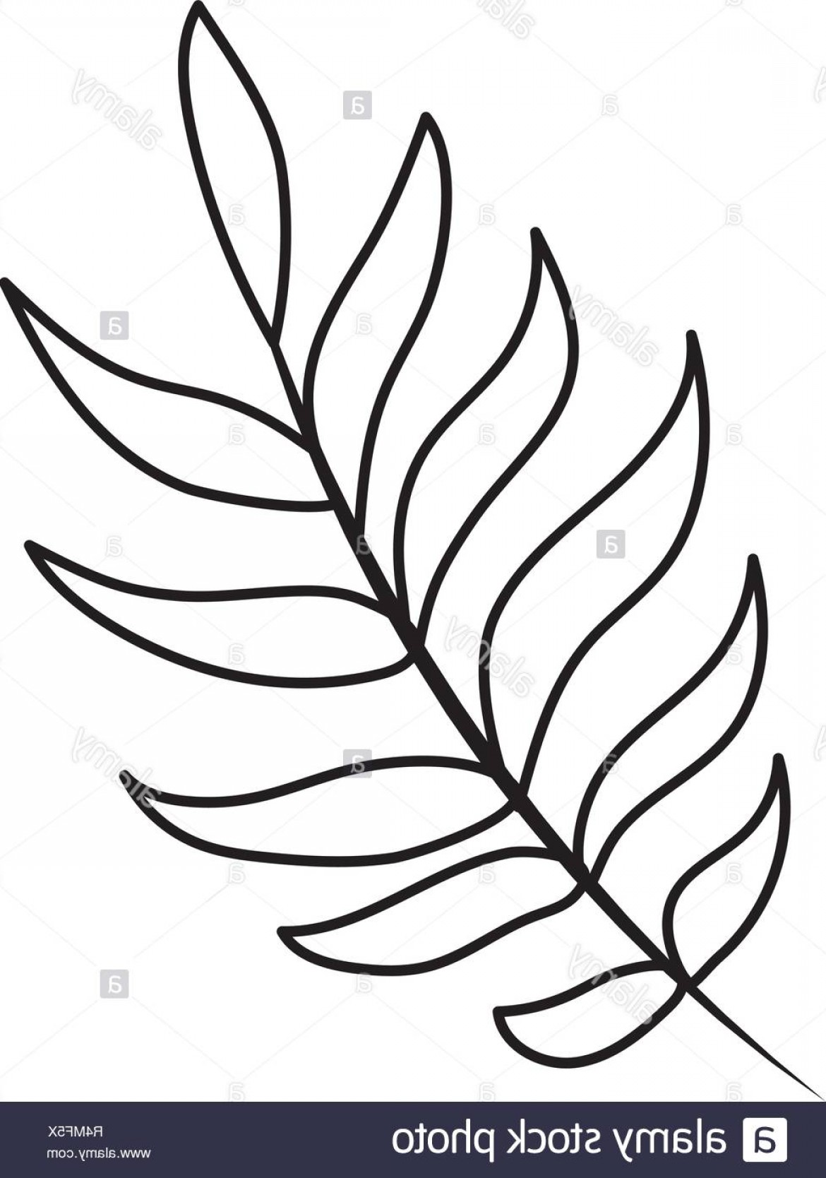 Vector Leaf Graphicd: Tropical Palm Leaf Cartoon Vector Illustration Graphic Design Image