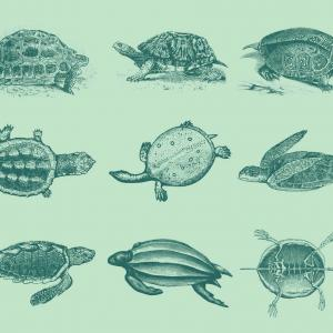 Sea Turtle Vector Art Vintage: Turtles At The Sea