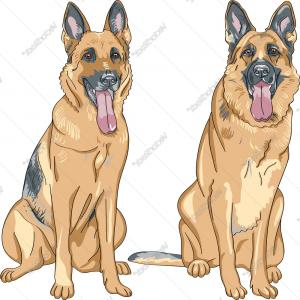 German Shepherd Cartoon Vector: Two Dog German Shepherd Breed Vector