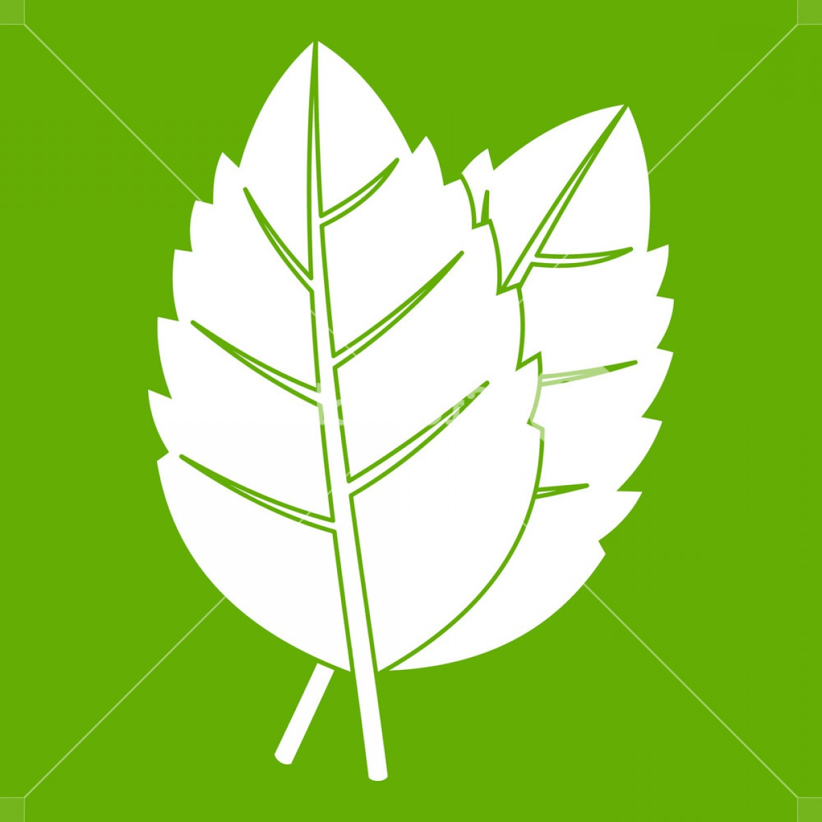 Basil Vector: Two Basil Leaves Icon White Isolated On Green Background Vector Illustration Rsxzyiuixjlpmbxj