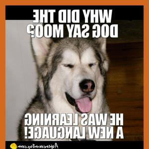 Vector Sayings Joke: Unbelievable Dog Meme U Jokes Never Ending Threads Husky Owners The For Cute Puppy Styles And Puppies Ideas