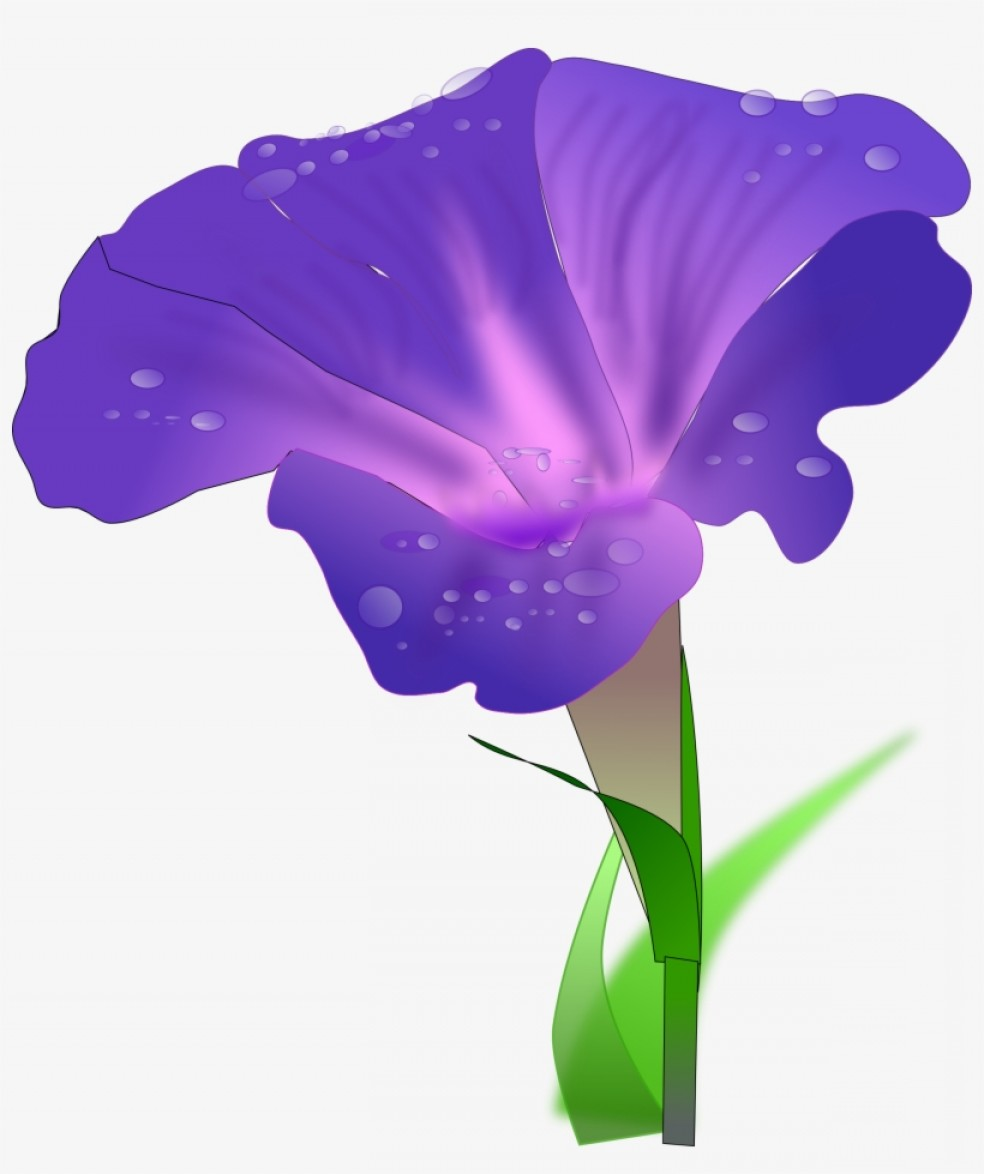 Morning Glory Transparent Vector: Uqrtytywjapanese Morning Glory Drawing Flower Water Spinach Morning