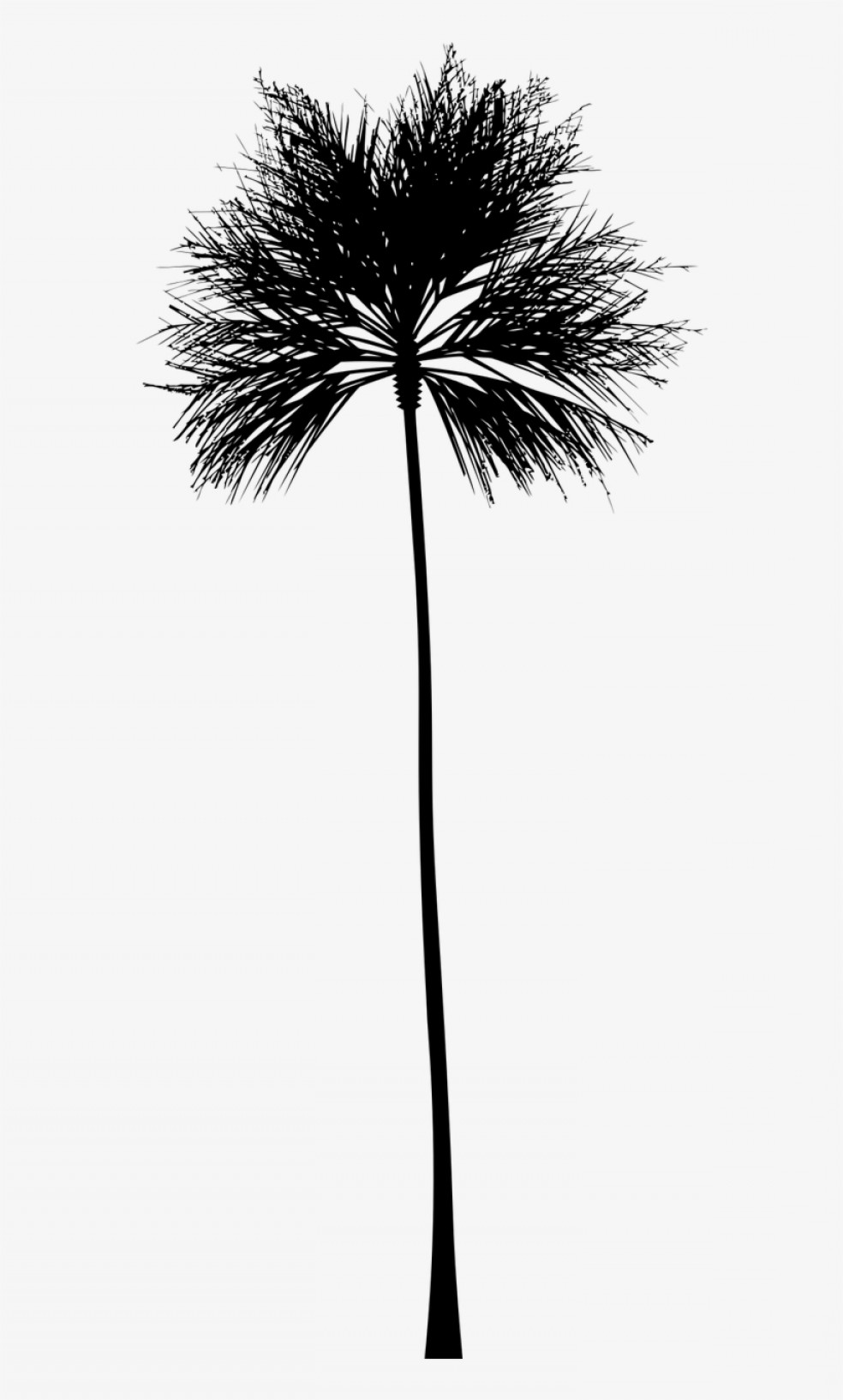 Watercolor Palm Tree Vector: Uwyawuqetropical Vector Black And White Palm Tree Silhouette