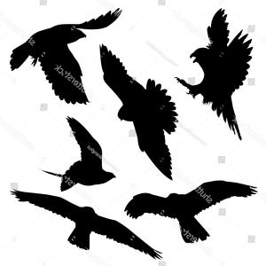 Falcon Silhouette Vector: Photostock Vector Falcon Silhouettes On The White Background