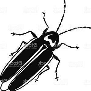 Bug Vector Art: Hand Drawn Engraving Sketch Of Beetle May Bug Vector Illustra Gm