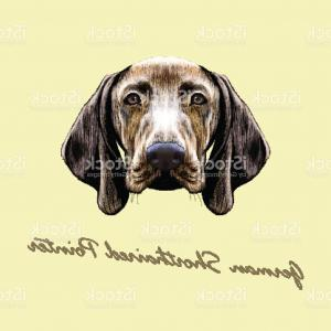 Pointer Dog Vector: An Observant German Shorthaired Pointer Pet Dog