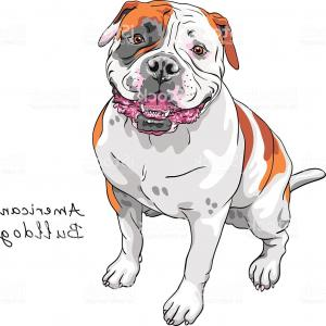 Vector Dog American Bully: Vector Sketch Dog American Bulldog Breed Gm