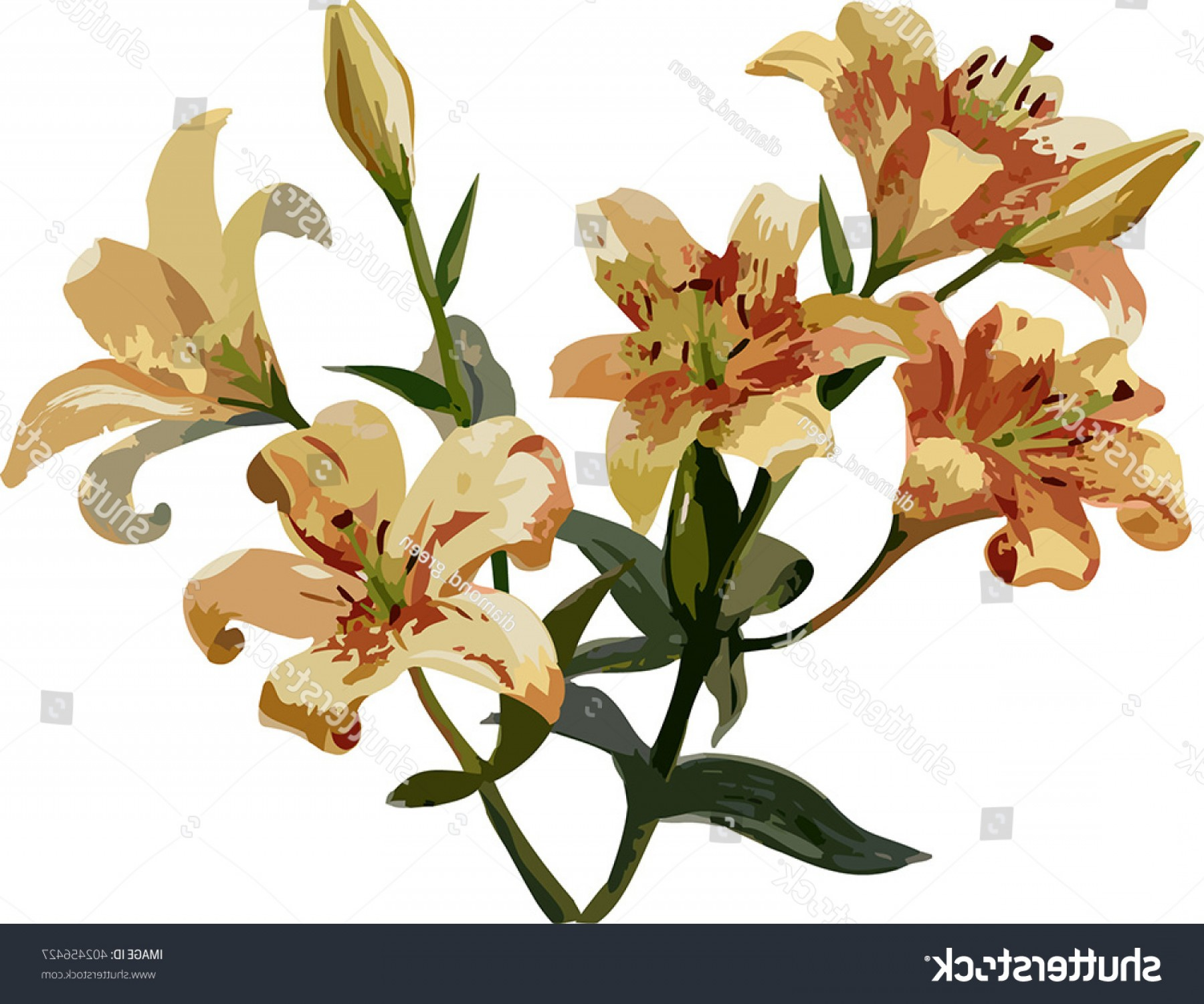Lily Vector Art: Vector Art Bouquet Lily Flowers