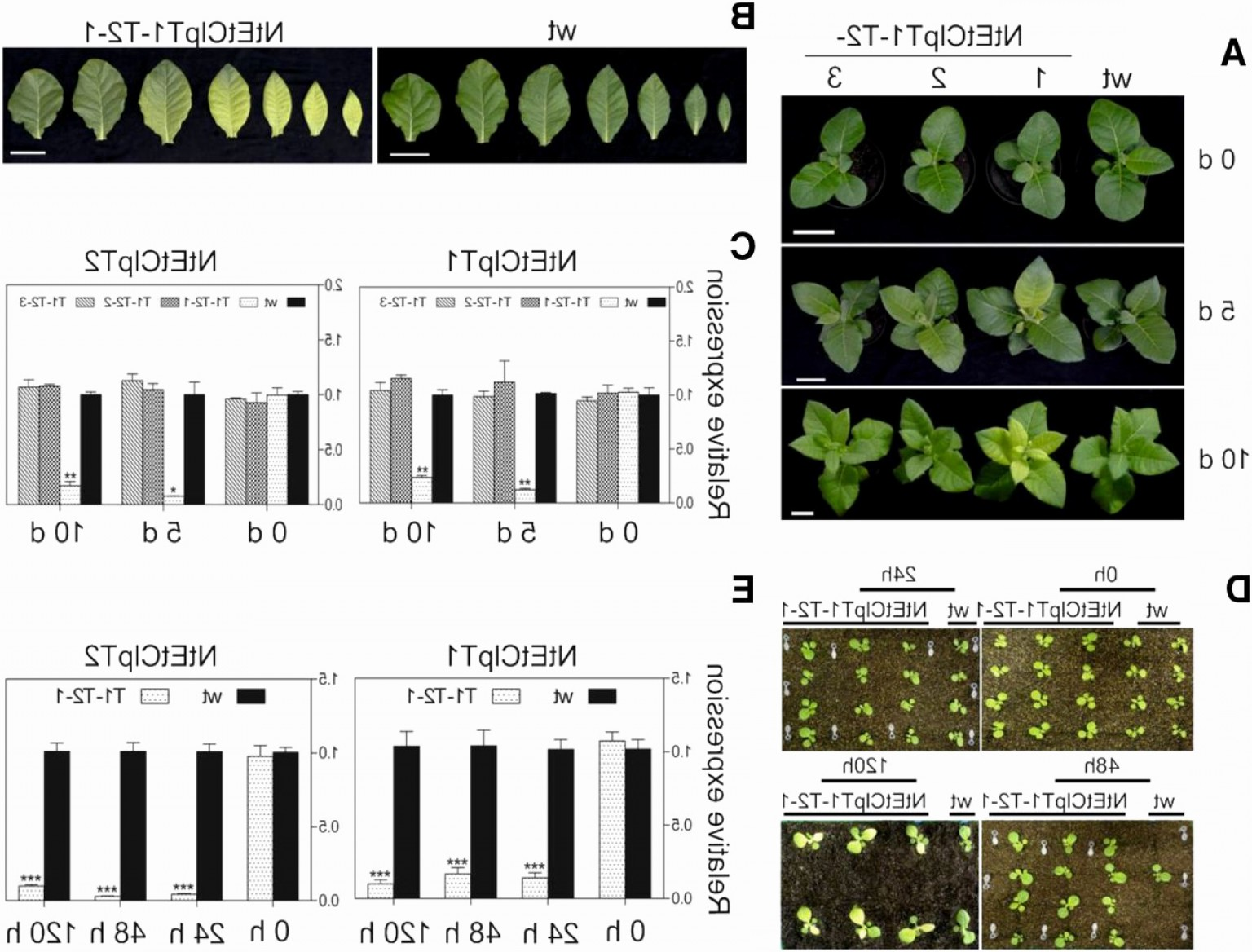 Vector Ban Plus: Vector Ban Plus Luxury Temporal Proteomics Of Inducible Rnai Lines Of Clp Protease Subunits