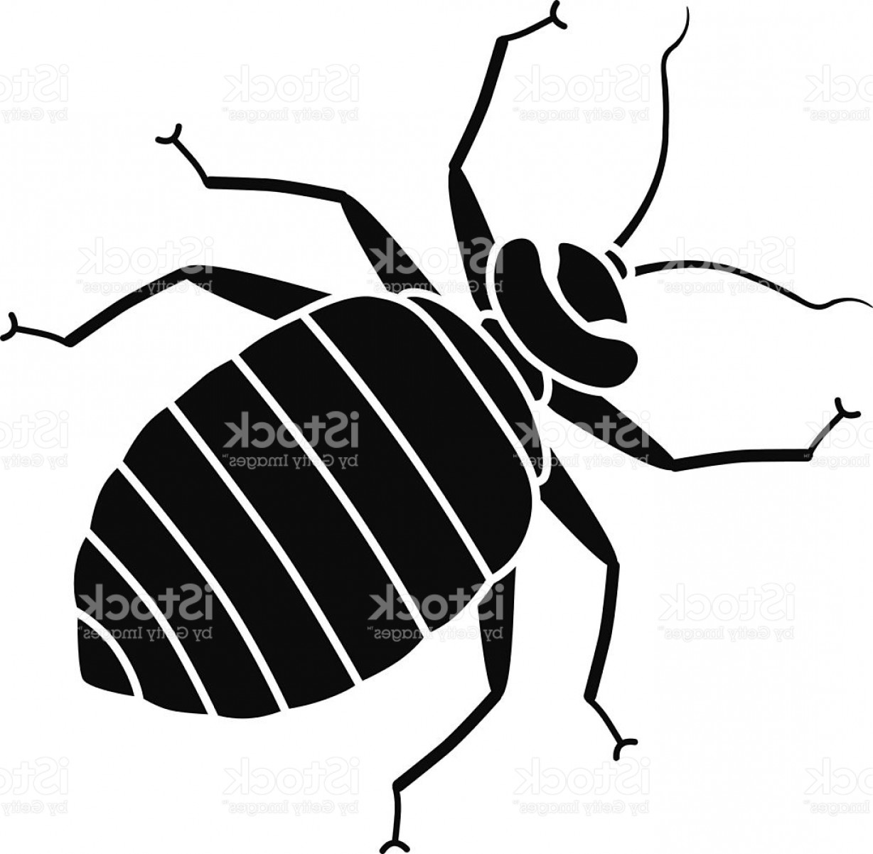 Bug Vector Art: Vector Bed Bug In Black And White Gm