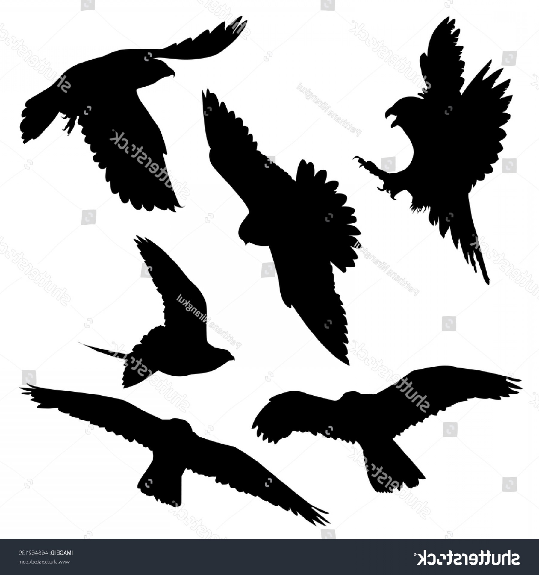 Falcon Silhouette Vector: Vector Bird Eagle Falcon Silhouettes Flying