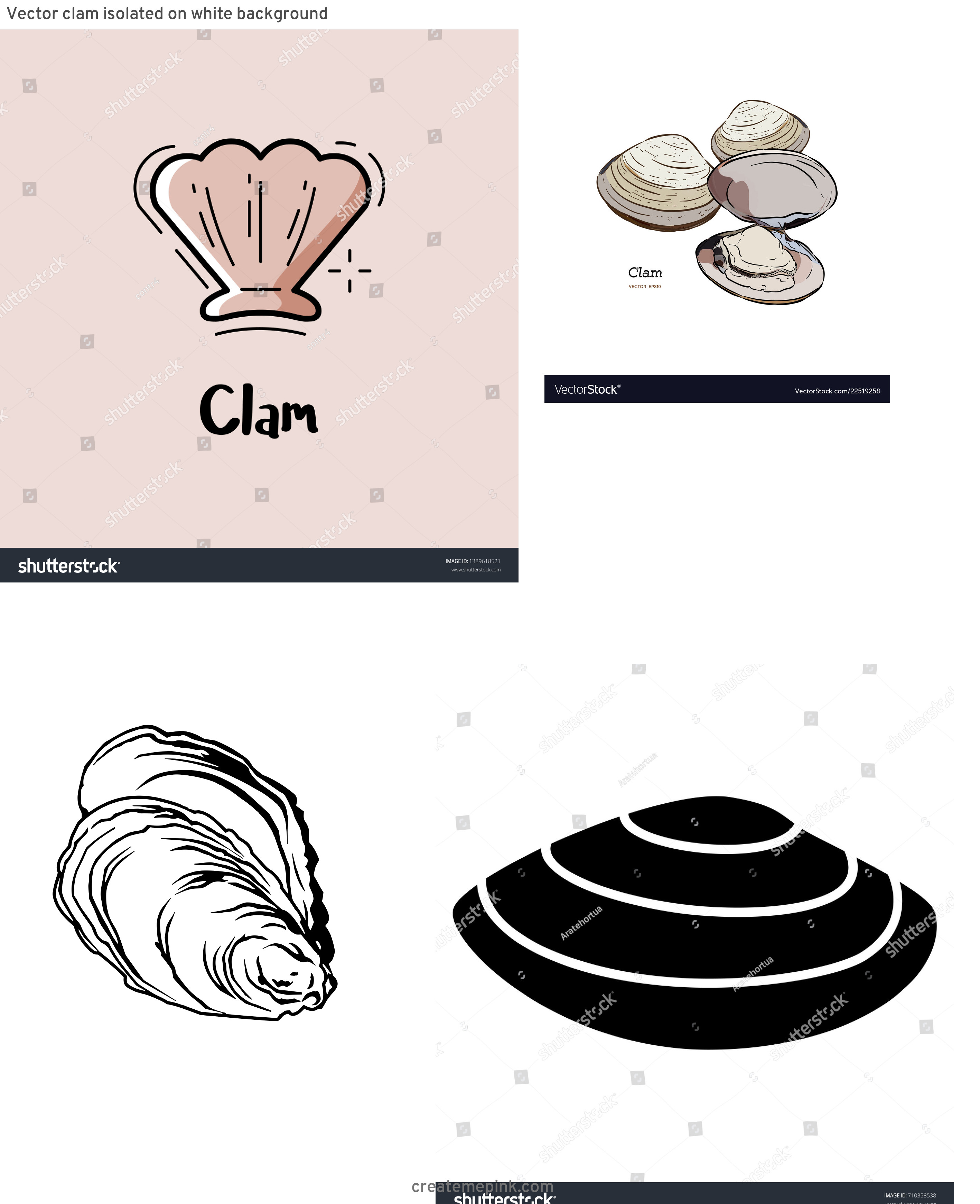 Clam Vector: Vector Clam Isolated On White Background