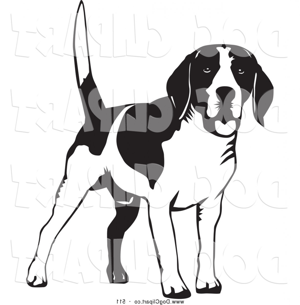 Vector Art Beagle Dog: Vector Clip Art Of A Friendly Happy Beagle Dog Wagging His Tail On A White Background By David Rey