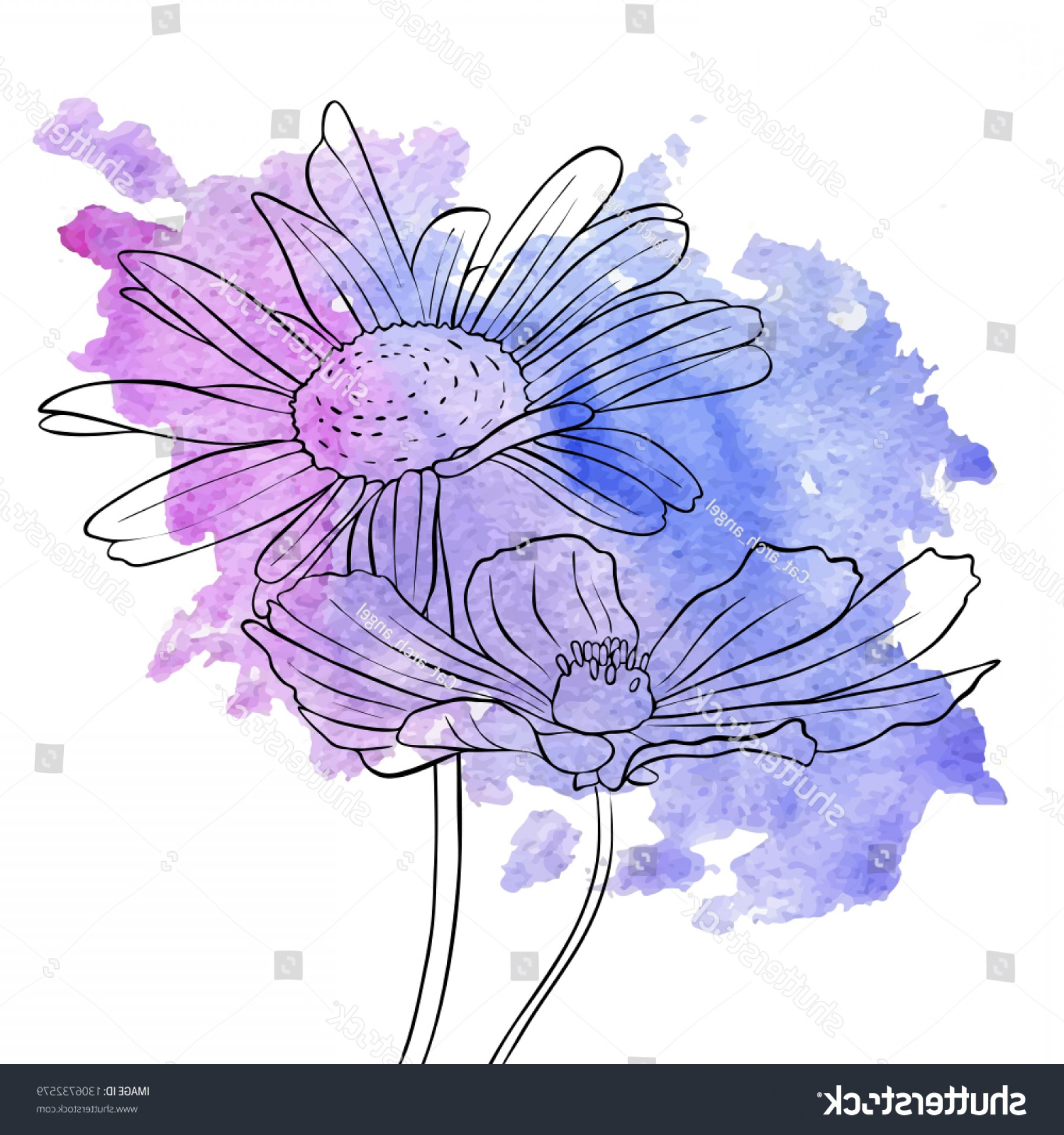 Lilac Vector Drawing: Vector Drawing Daisy Flowers Lilac Watercolor