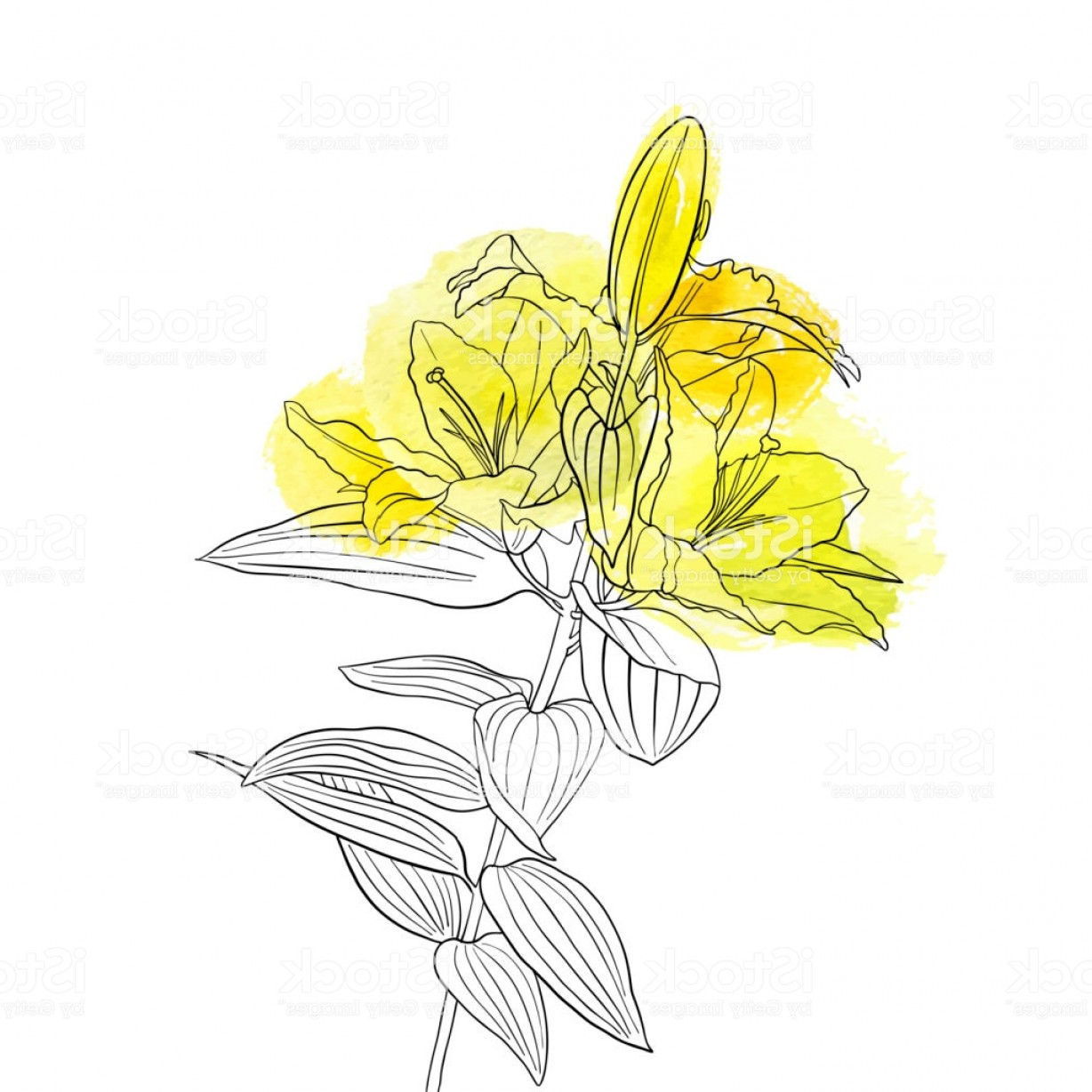 Lily Vector Art: Vector Drawing Flower Of Lily Gm