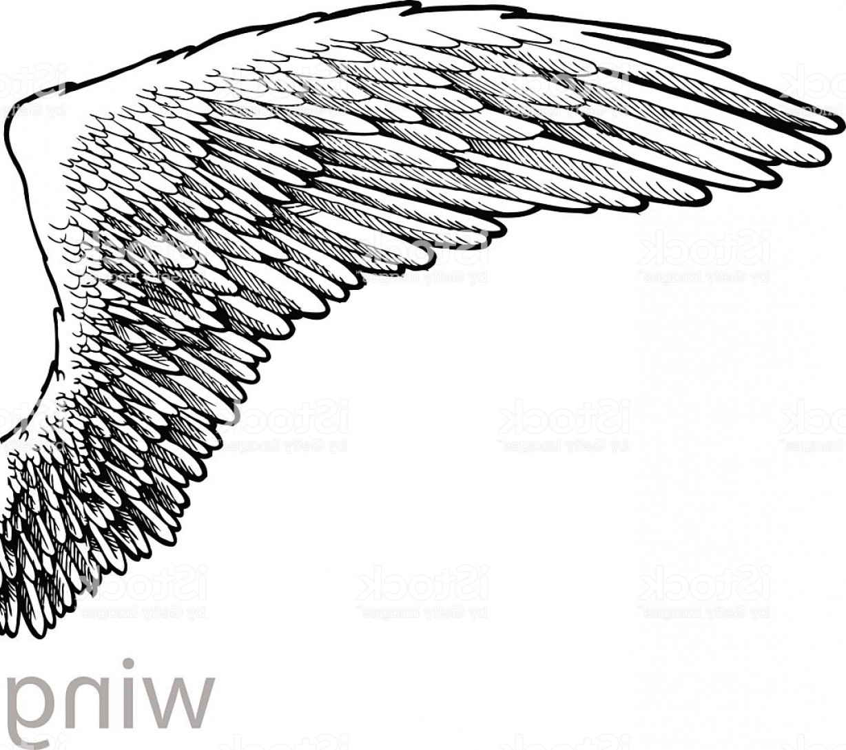 Vector Drawing Feathers: Vector Drawing Wing With Feathers Gm